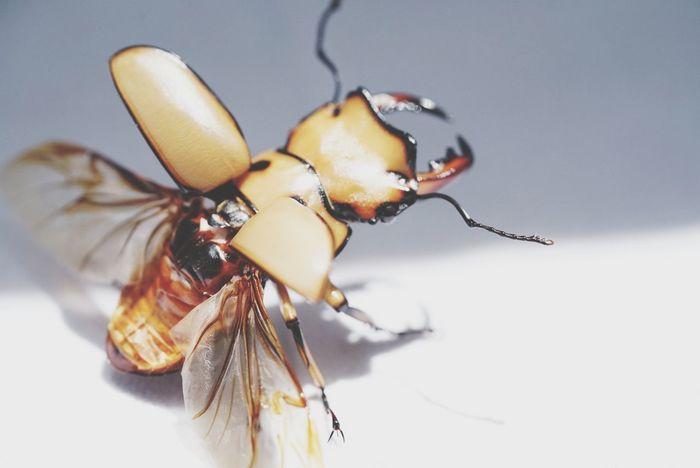 Beetle Beetles Life Insect Animal Themes Invertebrate Animal One Animal Animal Body Part Animal Wildlife