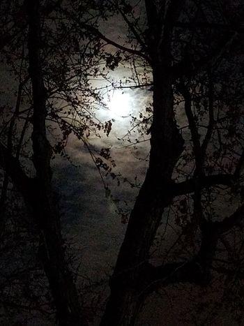 Brooklyn Park, Minnesota. Tree No People Nature Sky Nightphotography Night Night Photography Night Sky Moonlight