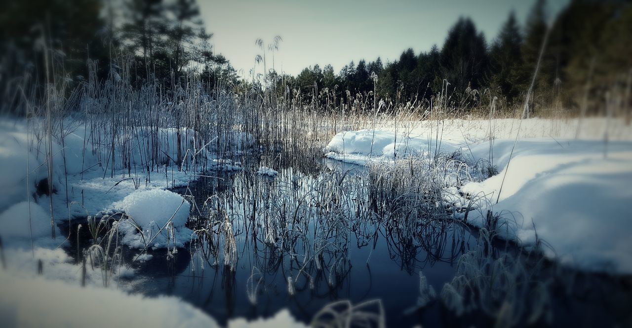 Tree Sky Close-up Nature No People Outdoors Water Beauty In Nature Day Landscape Winter Sachsenkam