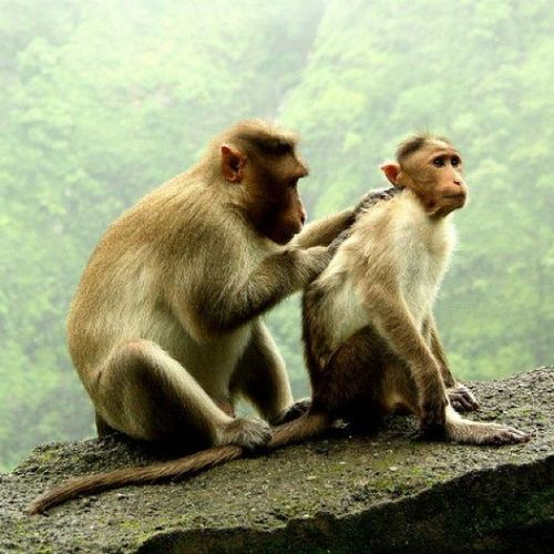 Healthy citizens are the greatest asset any country can have - Winston Churchill. Clicked at Varanda Ghat, Maharashtra. Monsoon Mountainranges Monsoonmagic Monkey monkeybusiness incredibleindiaofficial incredibleindia india wanderlust travelbug travel maharashtra
