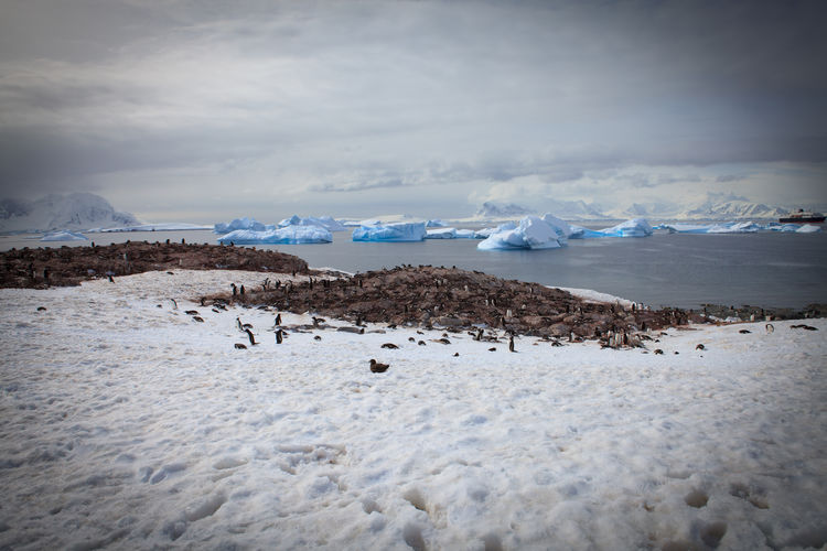 Penguin Colony At Antarctica Against Sky
