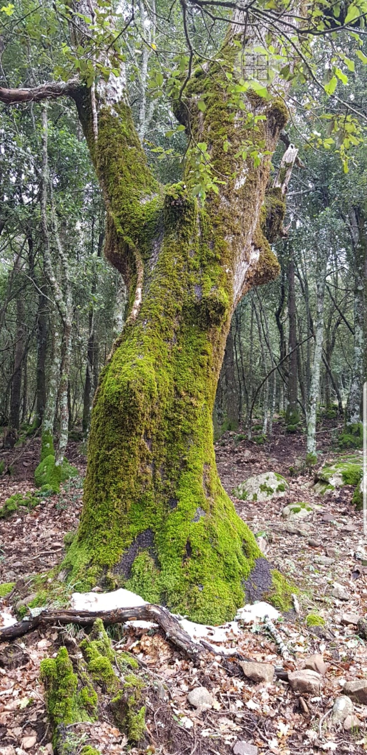 tree, plant, forest, land, tree trunk, trunk, tranquility, growth, beauty in nature, nature, no people, scenics - nature, day, tranquil scene, woodland, green color, moss, non-urban scene, environment, outdoors, rainforest, bark, flowing water