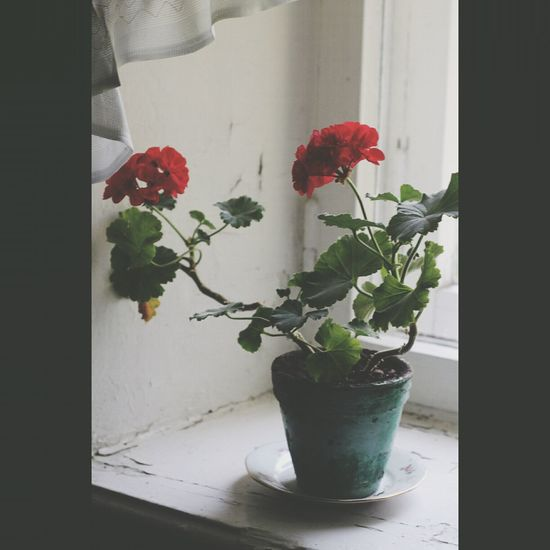 Flowers Window Sill Like This