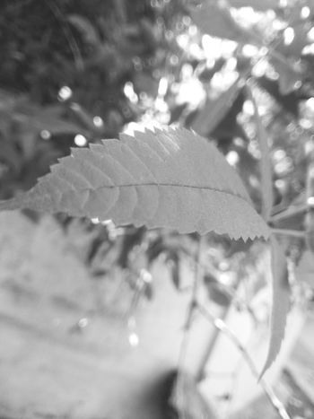 Close-up Nature Green Color Leaf Day No People Plant Outdoors Growth Freshness Beauty In Nature Fragility Tree