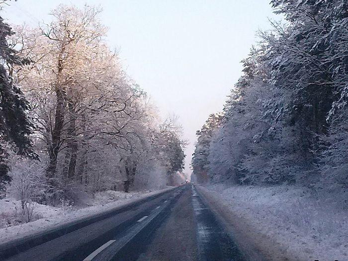 Tree , Snow , Winter , Drzewo, śnieg , Zima Snow ❄