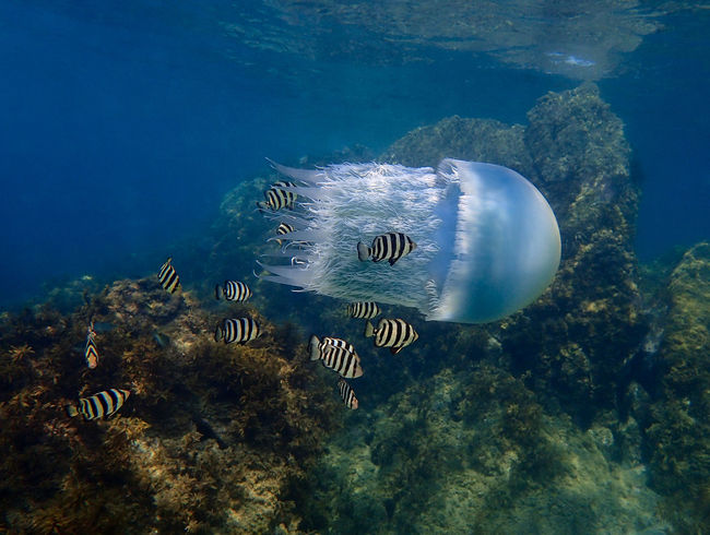 In The Sea Jellyfish Jellyfish Gallery Jellyfish Tank Life Nature Photography Nature_collection Underwater