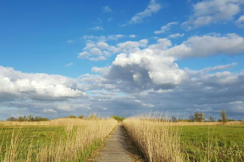 Cloud - Sky Beauty In Nature EyeEm Nature Lover Clouds Spring Springtime Fryslan Bergumermeer Staatsbosbeheer Holland Moorland Lost In The Landscape
