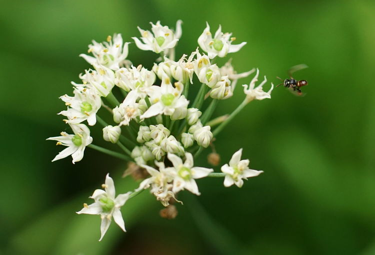 Beauty In Nature Close-up Flower Flower Head Flowering Plant Focus On Foreground Insect Petal Plant Pollen Pollination White Color