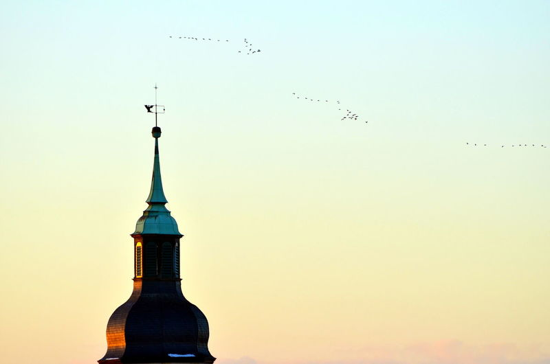 Low angle view of birds flying over built structure