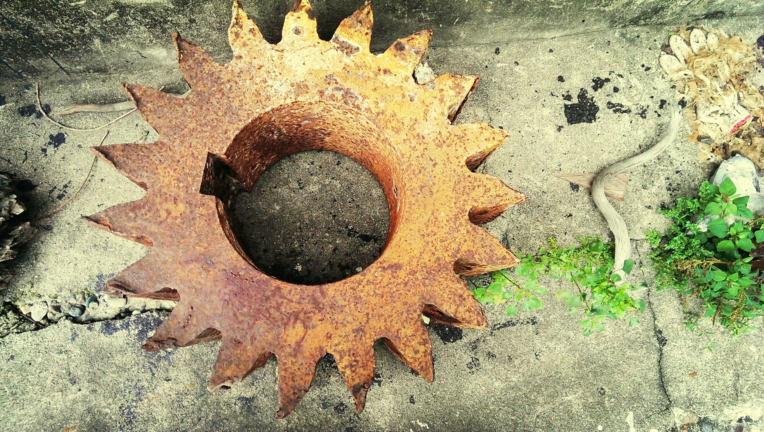 leaf, close-up, high angle view, directly above, day, circle, wall - building feature, no people, outdoors, plant, growth, textured, metal, pattern, nature, built structure, rusty, creativity, weathered, art and craft