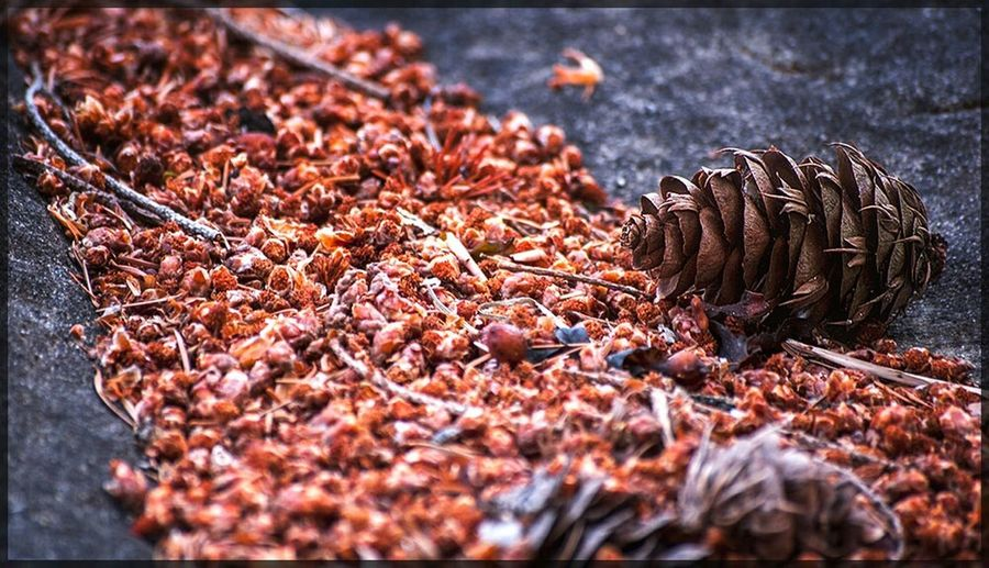 A river of... Gabriola DSLR Nature Drumbeg Pinecone