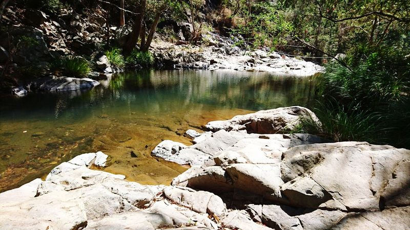 Nature Rainforest Rainforest Qld Rainforest Australia Beauty In Nature Nature Outdoors Water Rockpool Lost In The Landscape