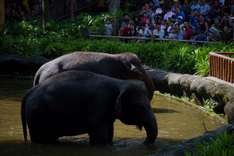 象さん♪ Animal