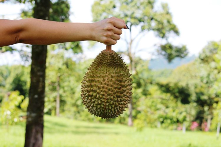 Close-up of hand holding durian on field against sky
