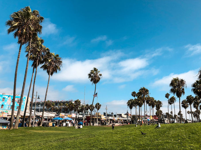 Panoramic view of people and palm trees against blue sky