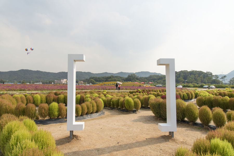 festival of globe amaranth flower with bellvedere at Nari Park in Yangju, Gyeonggido, South Korea Plant Animal Themes Beauty In Nature Bellvedere Day Grass Landscape Mammal Mountain Nature No People Outdoors Park Scenics Sky Tree Water
