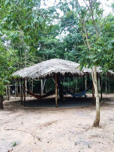 EyeEmNewHere Eye4photography  Tranquil Scene Tree Nature Growth Outdoors Beauty In Nature Thatched Roof Tranquility Tree Trunk Day Built Structure Gazebo No People The Way Forward Tree Area Eco Tourism Landscape Beauty In Nature Nature Tranquility EyeEm Best Shots EyeEm Best Edits EyeEmBestPics