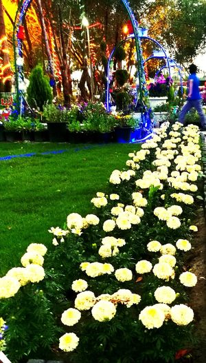 للسكوت أسرار Flower Tree Multi Colored Flowerbed Park - Man Made Space Plant Architecture Built Structure
