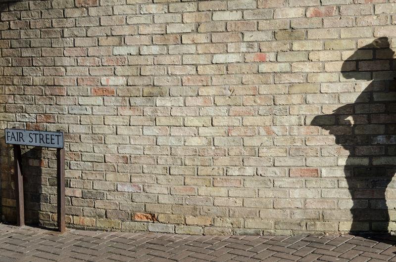 Bird on brick wall