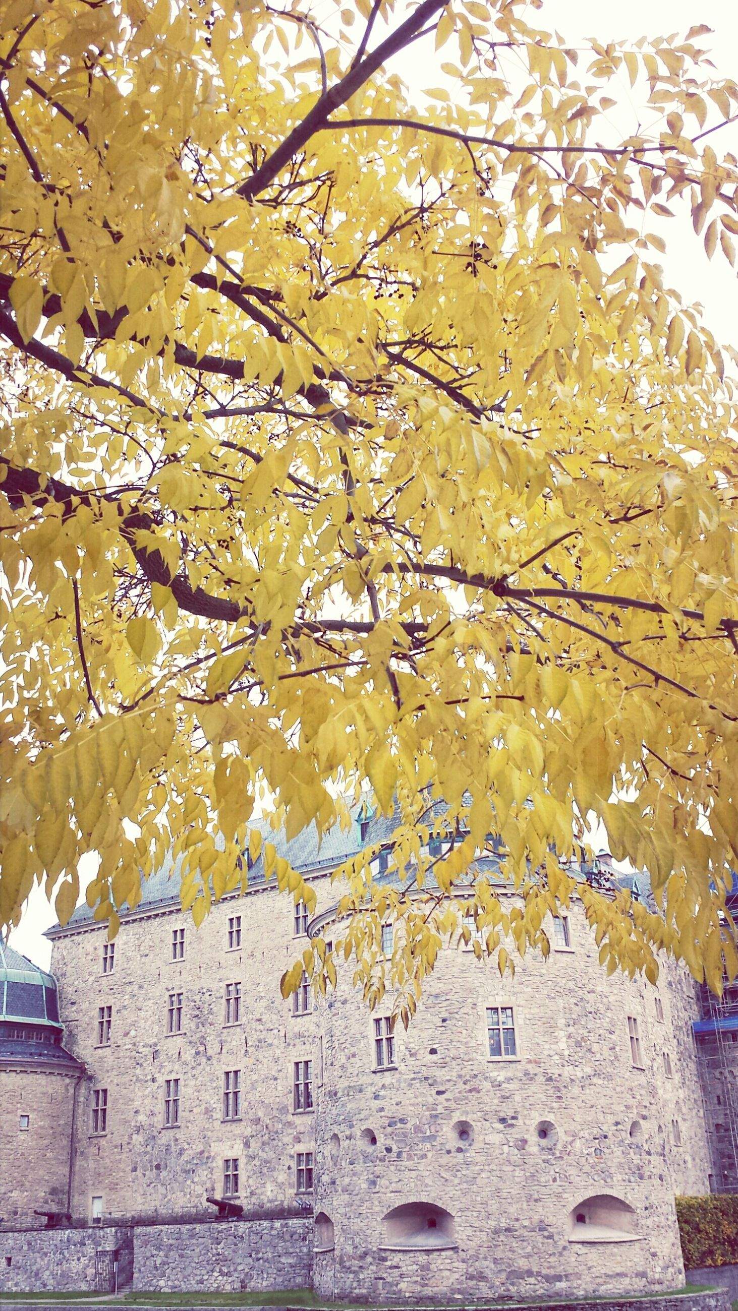 tree, built structure, architecture, autumn, branch, yellow, building exterior, flower, change, season, growth, nature, low angle view, beauty in nature, day, leaf, outdoors, no people, sky, wall - building feature