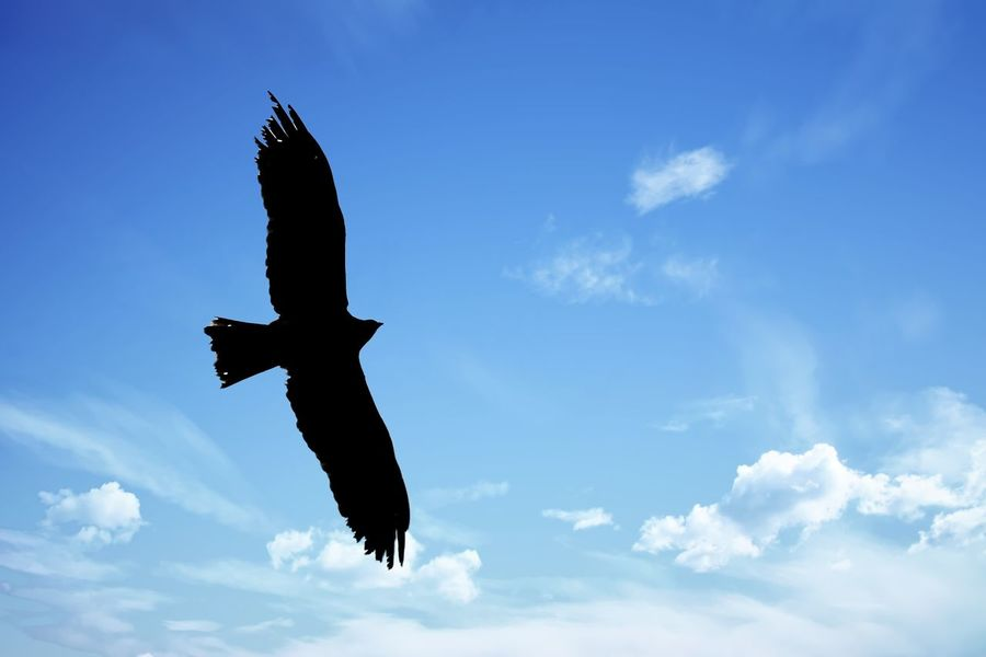 An eagle in flight Avian Beauty In Nature Eagle In Flight Flying Freedom Low Angle View Mid-air Nature Outdoors Sky Spread Wings