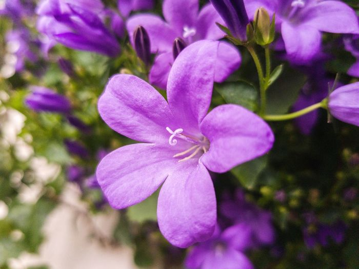 Flower Petal Purple Nature Fragility Beauty In Nature Growth Plant No People Flower Head Freshness Blooming Outdoors Day Close-up Break The Mold S8 Collection Botanical Garden Herbal Medicine Plant Part Alternative Medicine Nature Beauty In Nature Growth EyeEmNewHere