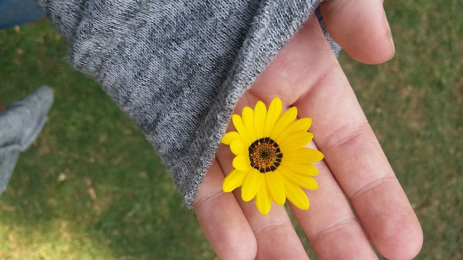EyeEm Selects it's the small things Flower Human Body Part Yellow One Person Nature Summer People Outdoors Field Beauty In Nature Close-up Day Petal Flower Head Adult FragilitySunlight Long Hair Sunflower Grass Adults Only Springtime