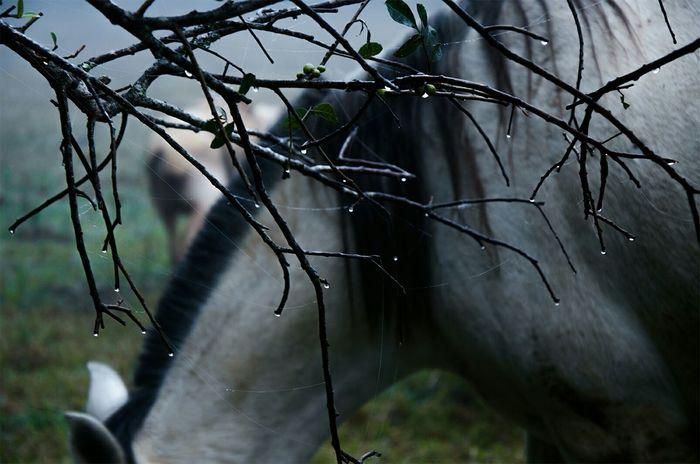 Nature Natureza Horse Drizzle Cavalo Garoa Dawn Amanhecer Field Mistery Chuva Forestrain Forest Brazil Dew Orvalho