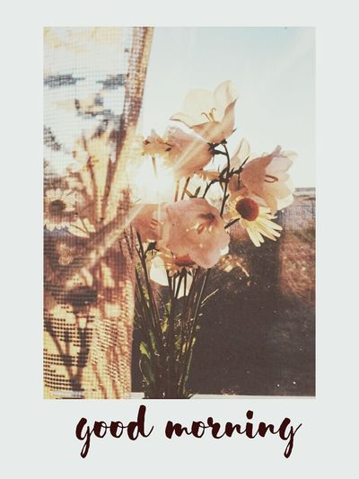 This morning was so beautiful.. Flower Greeting Card  Autumn Paper Indoors  No People Nature Day