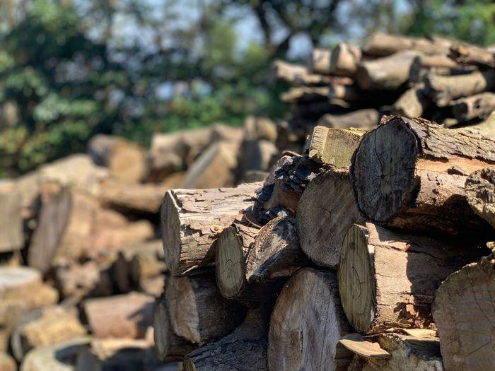 Log Timber Tree