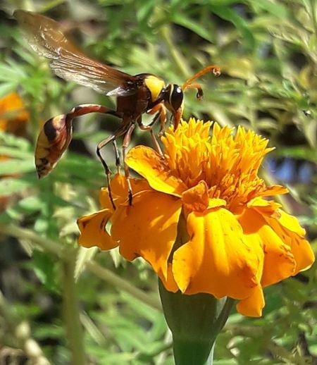 bee onflower