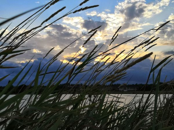 goodnight sun Honor 10 Blue Sky And Clouds Lake United Kingdom Grass Sunset Clouds Clouds And Sky Yellow Sky Plant Cloud - Sky Close-up Tall Grass Reed - Grass Family The Great Outdoors - 2018 EyeEm Awards
