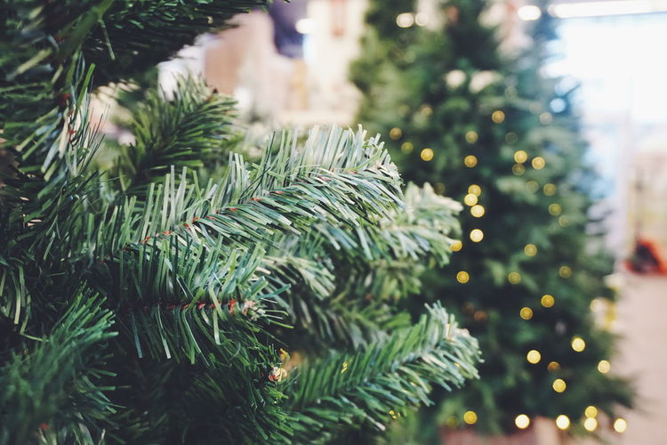 plastic christmas tree Christmas Tree Christmas Around The World Christmas Time Christmas Lights Christmas Lights Plastic Tree Plastic Christmas Tree Plastic Fake Tree Christmas Christmas Tree Tree Pinaceae Pine Tree Close-up Green Color Christmas Decoration Nature Day No People