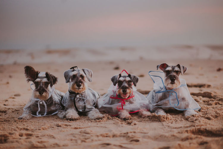Group of people with dog on beach