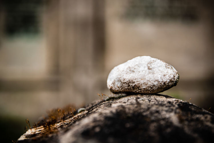 Close-up of stones on rock