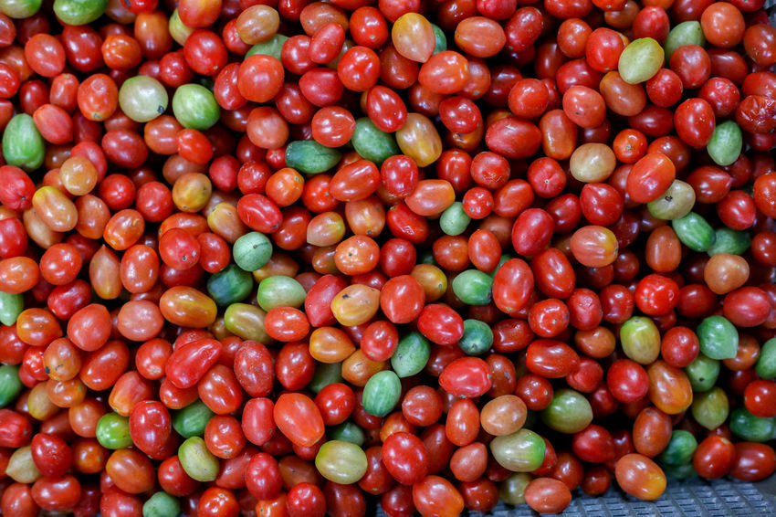 San Marzano Tomato Tomato Tomatoes Tomatoes🍅🍅 Tomato Sauce Tomato Fruit Tomato Plant Food And Drink Food Freshness Healthy Eating Fruit Red Large Group Of Objects Abundance Full Frame Wellbeing Backgrounds No People Close-up Vegetable Heap Group Of Objects Nature Group Outdoors Ripe