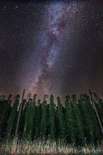 Star - Space Galaxy Milky Way Space Beauty In Nature Astrophotography Hops Hopfen Hopfen & Malz Beer Bier Tettnang Hallertau