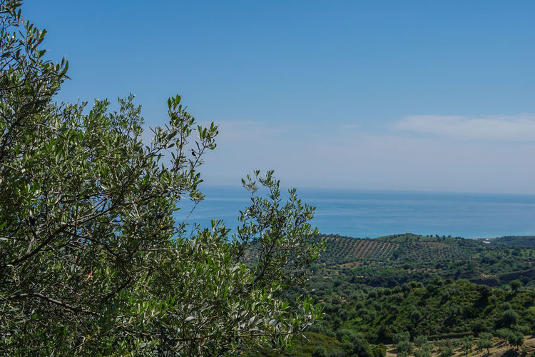 Beauty In Nature Blue Calabria Calabria (Italy) Calabriadascoprire Day Green Green Color Growth Horizon Over Water Idyllic Landscape Nature No People Non Urban Scene Non-urban Scene Outdoors Plant Remote Scenics Sea Sky Tranquil Scene Tranquility Tree