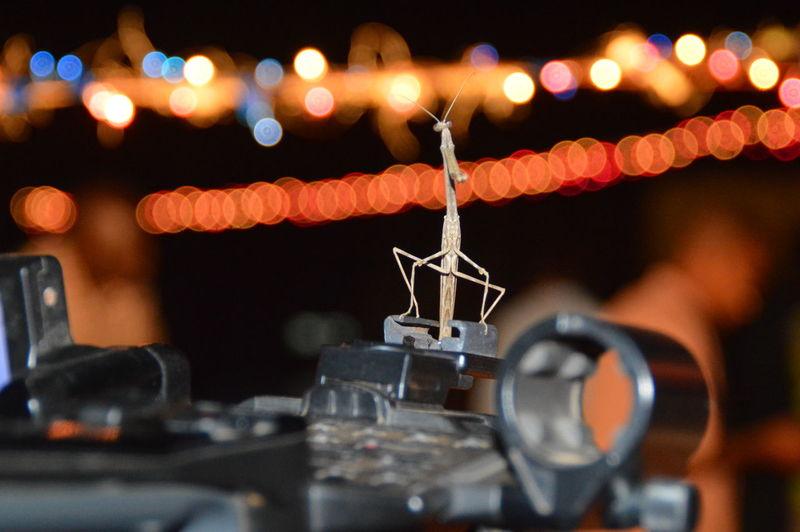 Praying mantis on metal against decorative illuminated lights at night
