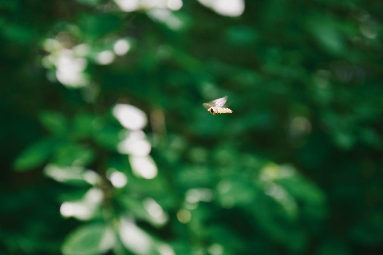 CLOSE-UP OF WHITE FLOWERING FLYING AGAINST BLUE SKY