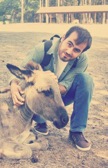 Donkey Serengeti Holiday Hello World