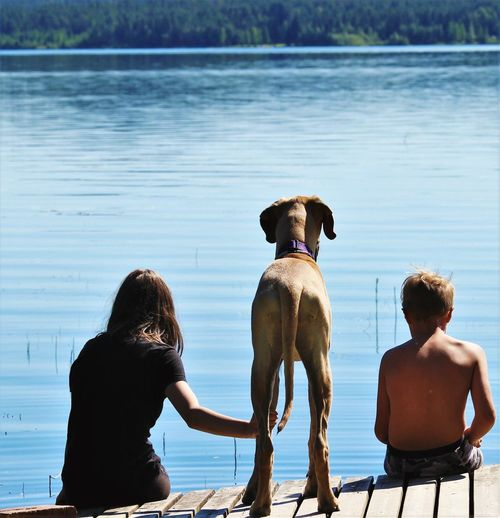 Rear view of siblings with dog on pier over lake