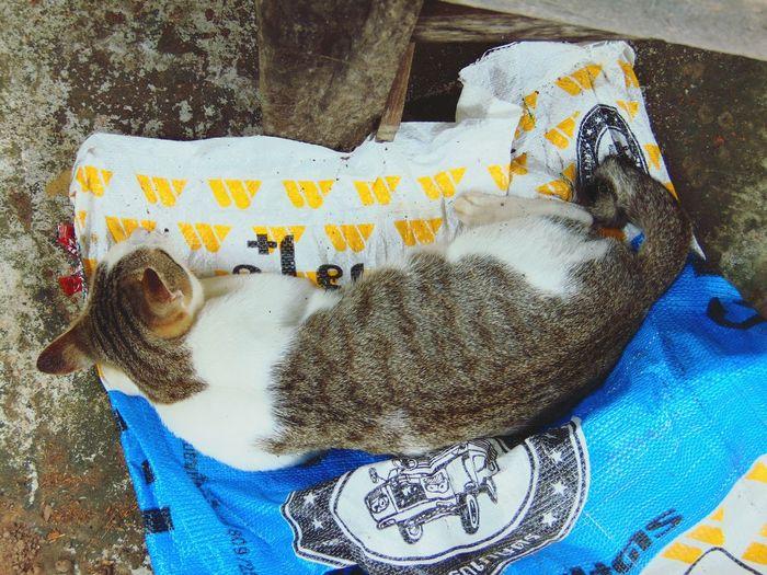 Portrait of cat relaxing on floor