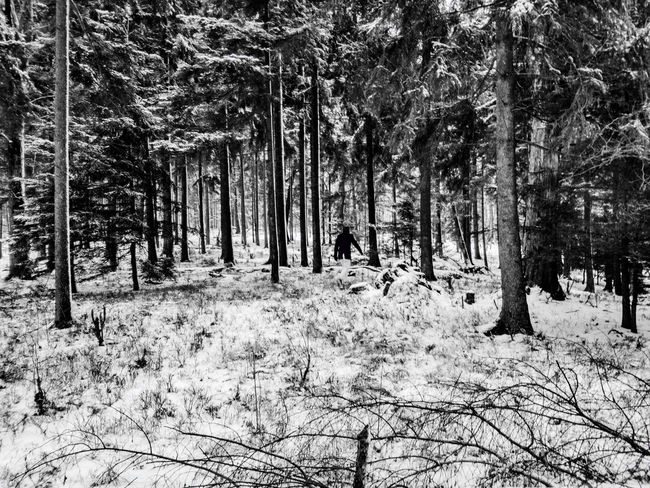 Beautiful winter EyeEmNewHere Black And White Tree Nature Snow Day Outdoors Winter Forest Tranquility Growth Tree Trunk No People Cold Temperature Beauty In Nature Sky The Traveler - 2018 EyeEm Awards The Still Life Photographer - 2018 EyeEm Awards The Great Outdoors - 2018 EyeEm Awards The Creative - 2018 EyeEm Awards