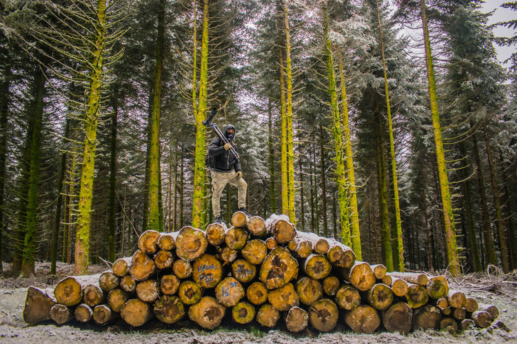 White and green Snow Nikonphotography Nikond5300 Tree Forestry Industry Woodpile Stack Timber Arrangement Forest Tree Trunk