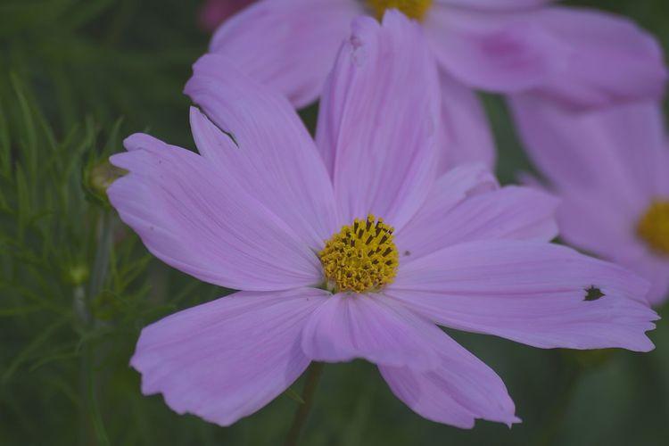 Flower Pollen Hdplant Hd Flower HD Nikon Colour Of Life