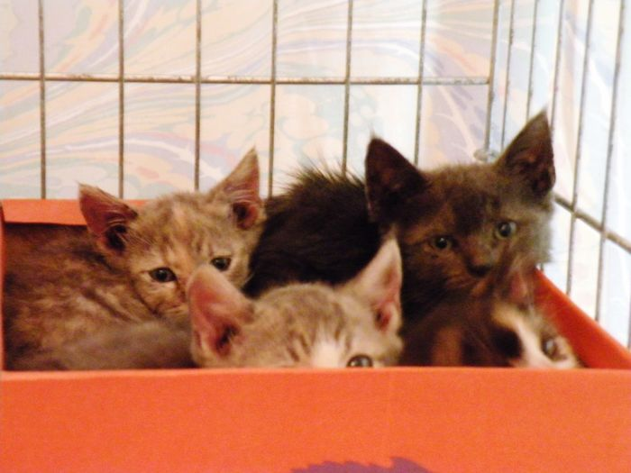 Four little babies saved from Super Storm Sandy. They were with me for more than 2 months and all were adopted. Cats Rescuedkittens Nikonphotography