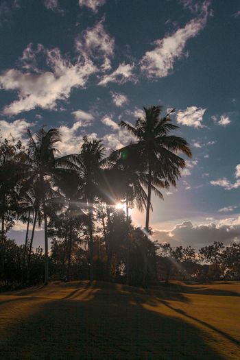 Sun Goes Down Hyattregency Palmtree Tree Plant Sky Cloud - Sky Palm Tree Beauty In Nature Growth Nature Tropical Climate Tranquil Scene Sunset