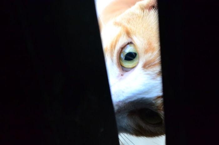 #adorable #animal #cat #cat #cute #love #CatEyes #cute #pet Animal Animal Eye Animal Themes Pets