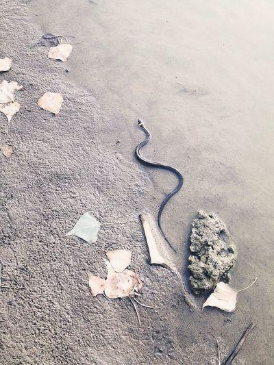 Snake Water Nature Swamp